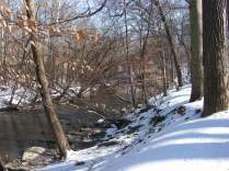 Winter Woods & Creek